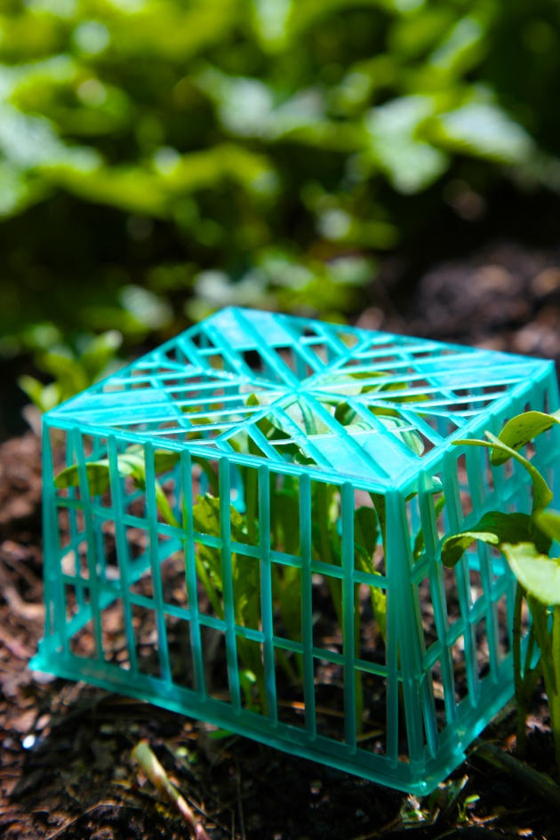 Turn your trash backwards: Place mesh produce baskets over seedlings to protect from birds, frost, and really big slugs.