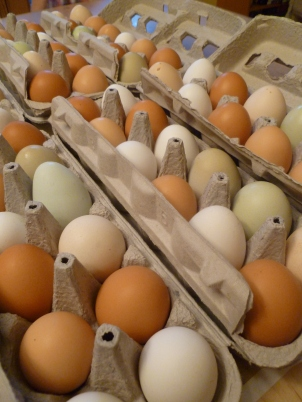 Eggs in Paper Cartons photo by Rebecca Rockefeller
