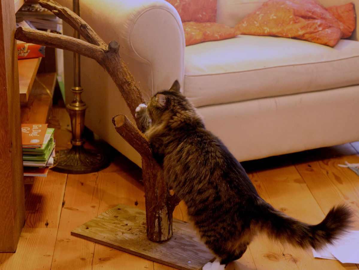 The Home Made Cat Scratch Tree Trash Backwards Blog