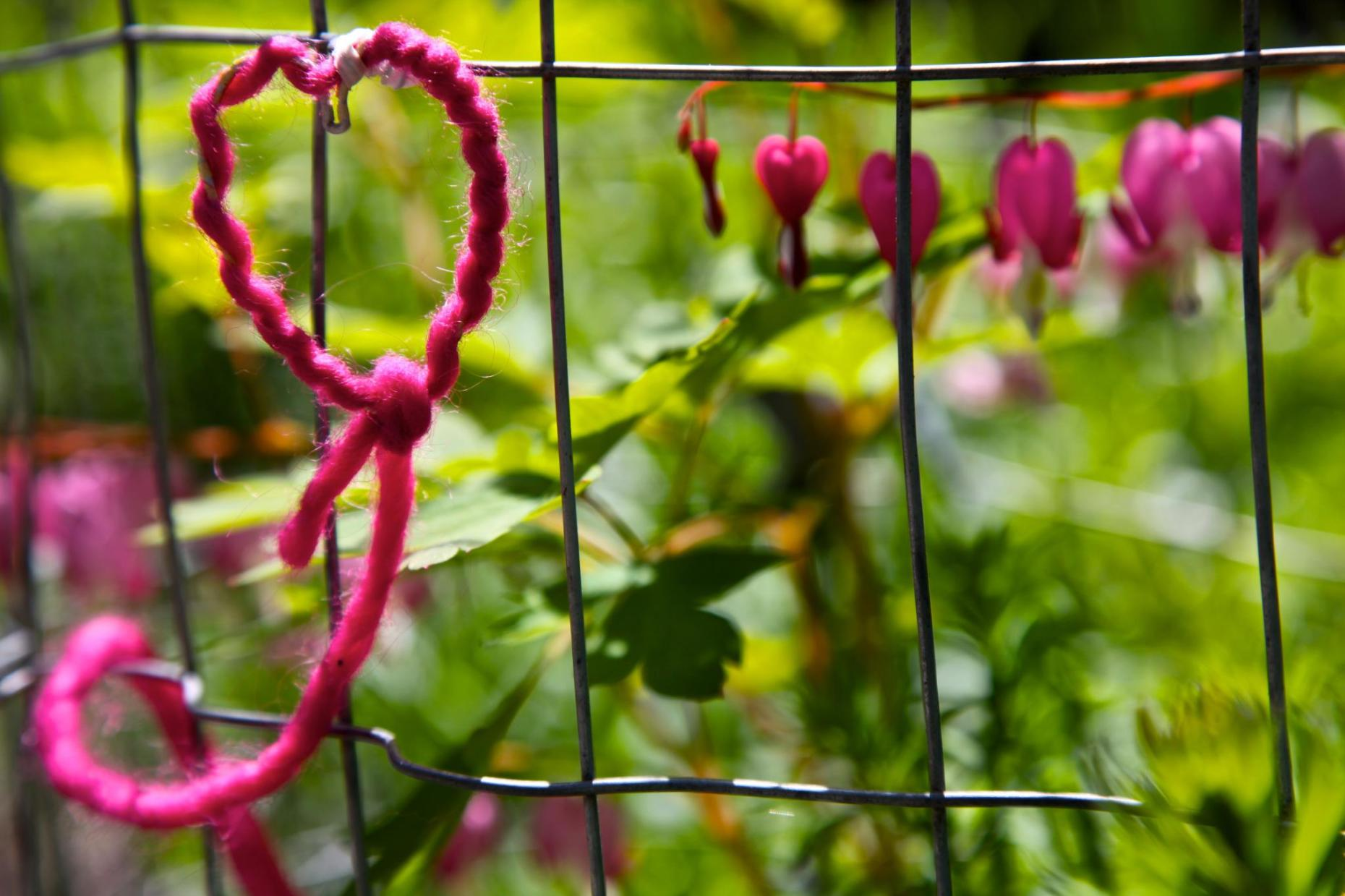 A wire and yarn heart to help protect the bleeding hearts from the deer. Photo © Liesl Clark