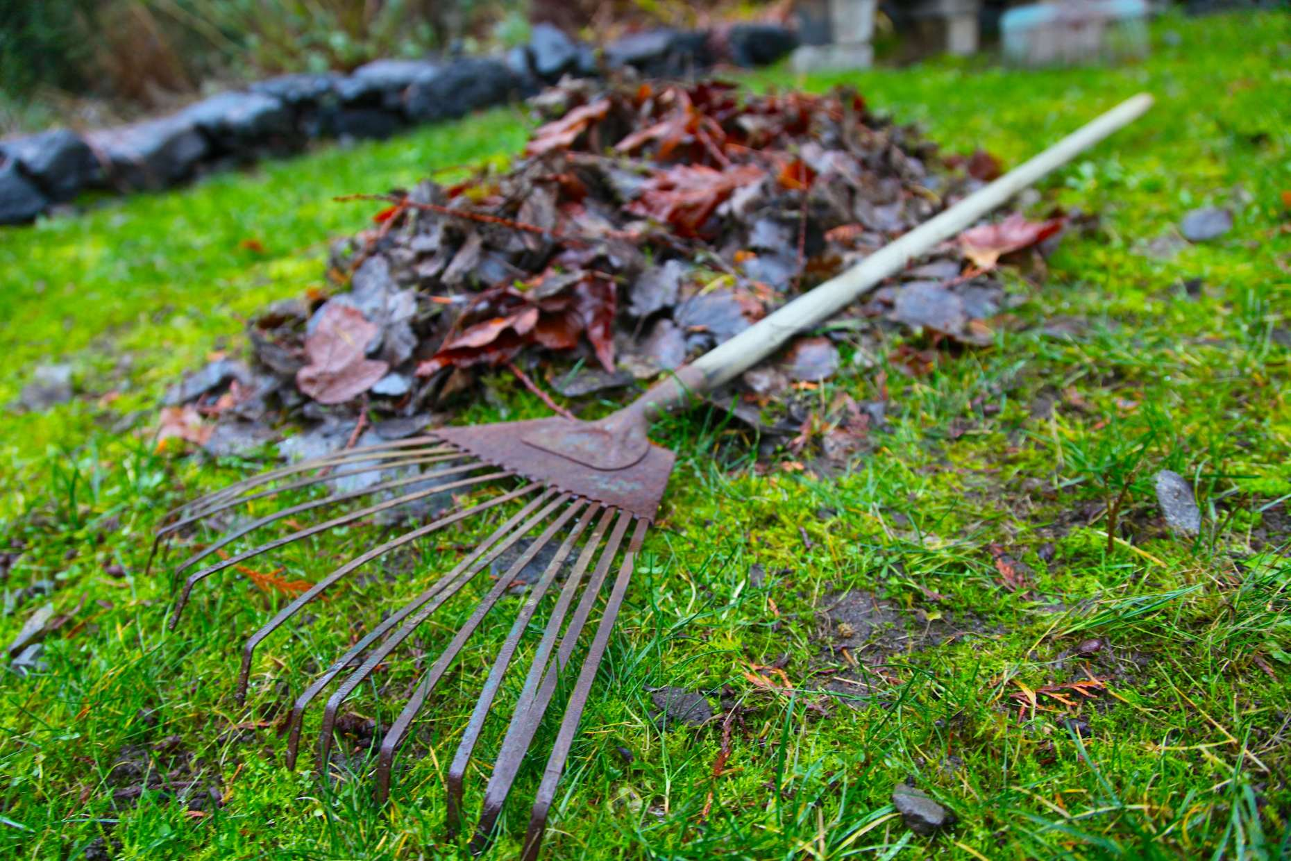 Introducing my favorite rake. Metal, and about 10 years old. It gets all jobs done. Photo © Liesl Clark