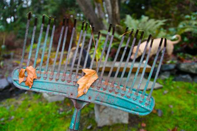 Backside of another very old metal rake (likely 8 years old). The one bent tine can easily be bent back into place. Photo © Liesl Clark