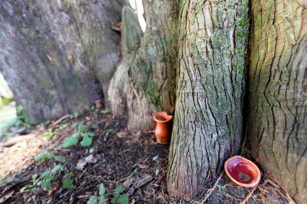 Meet our sacred tree, where ceramic offerings are made.  Photo © Liesl Clark