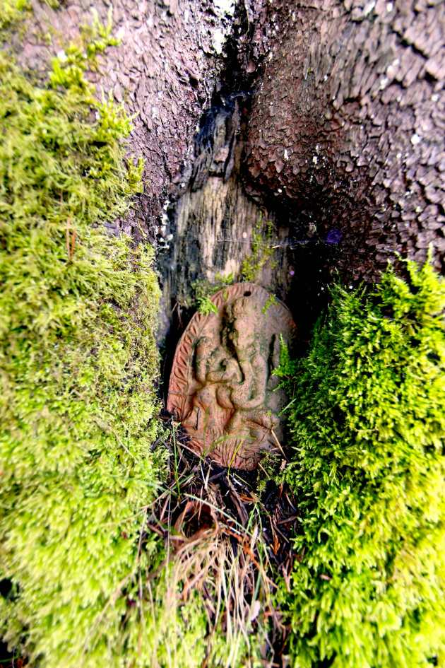 Ganesh, now enveloped in a douglas fir. Photo © Liesl Clark