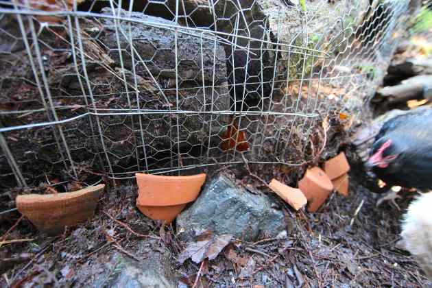 Broken terra cotta pots plug up holes in our chicken yard to keep the vermin away. Photo © Liesl Clark