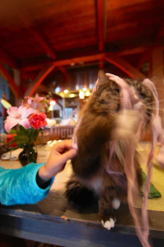 Kitties live for soft sock yarn. Photo © Liesl Clark