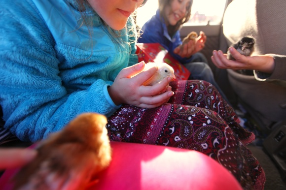 4 Little People Holding 4 Chicks On the Way Back Home. Photo © Liesl Clark