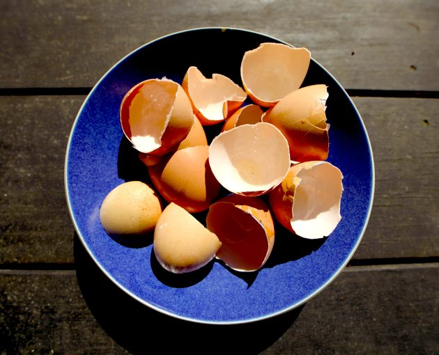 33 Eggselent uses for your eggshells. Photo © Liesl Clark