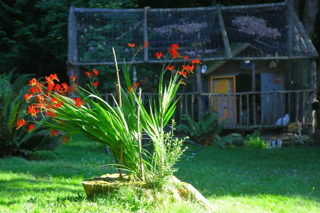 Tree Stump Planters are Natural and Easy. Photo © Liesl Clark