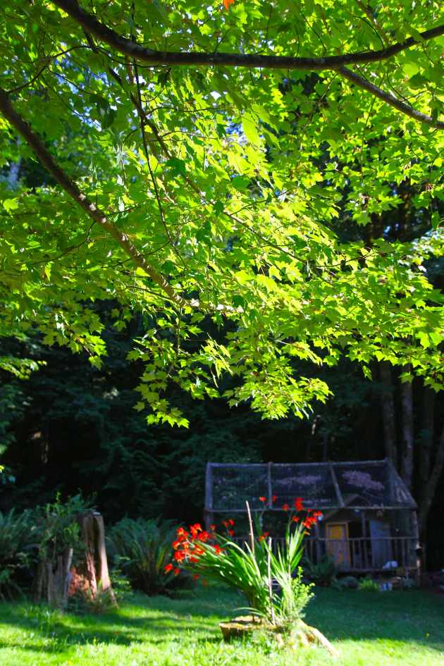 I turned an unwanted tree stump into a favorite feature of the property. Photo © Liesl Clark