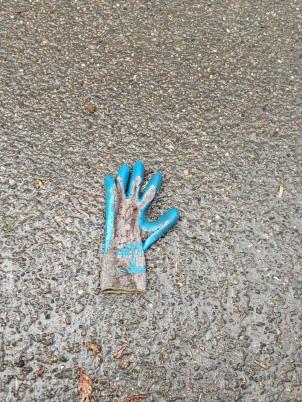 Garden Gloves Rain or Shine. Photo © Finn Clark