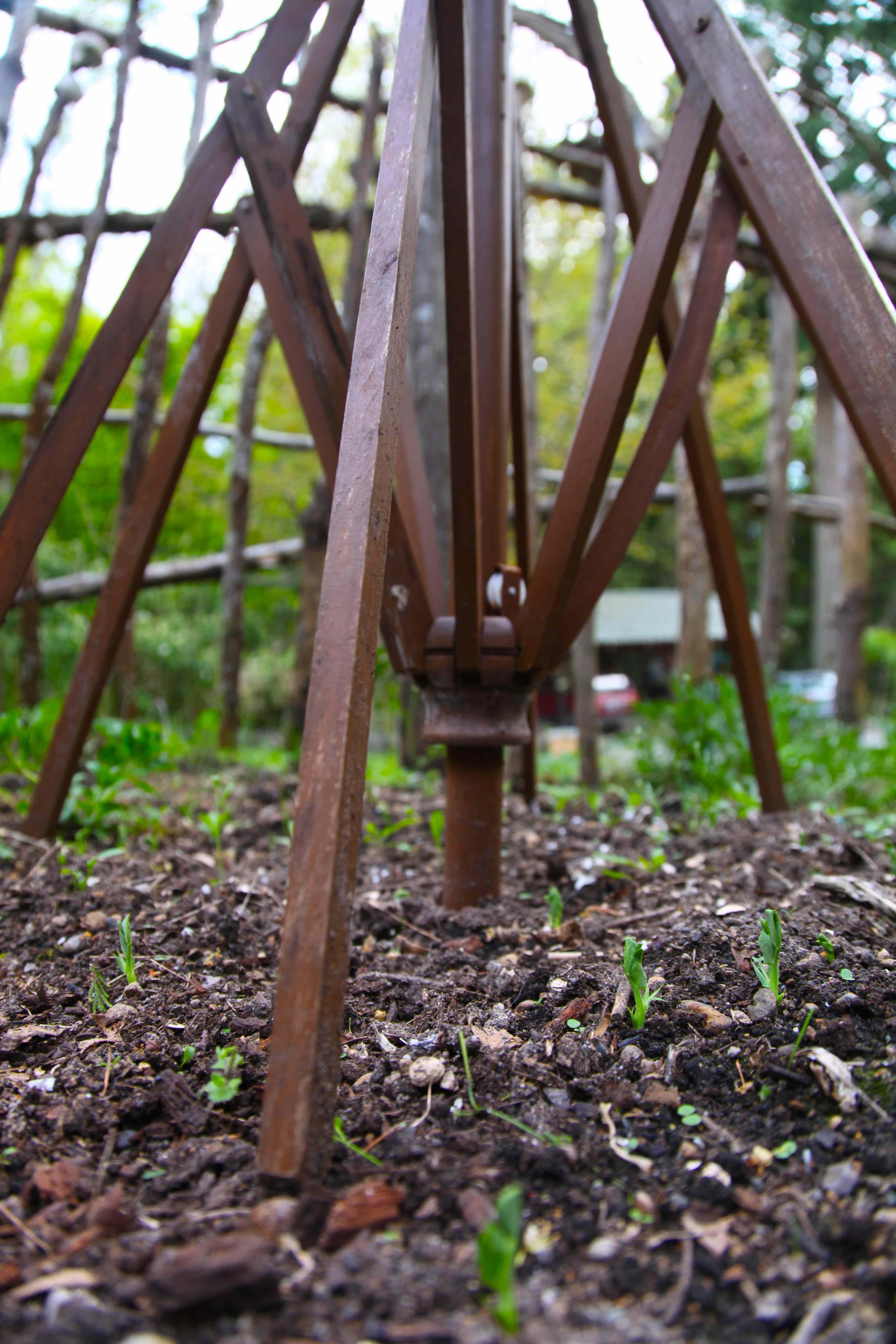 Patio umbrella pea trellis pioneering the simple life for Deck trellis