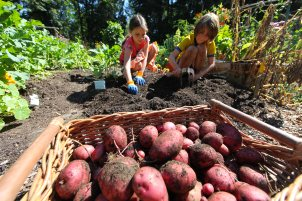 Potatoes Harvested For the Hungry. Photo © Liesl Clark