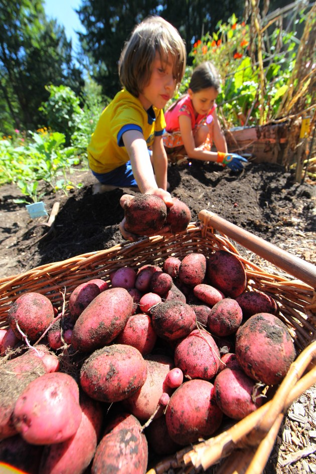 Children Love Harvesting For Others in Need. Photo © Liesl Clark