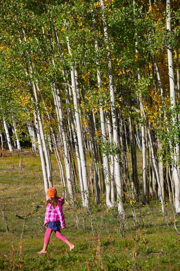 A walk through the aspens. Photo © Liesl Clark