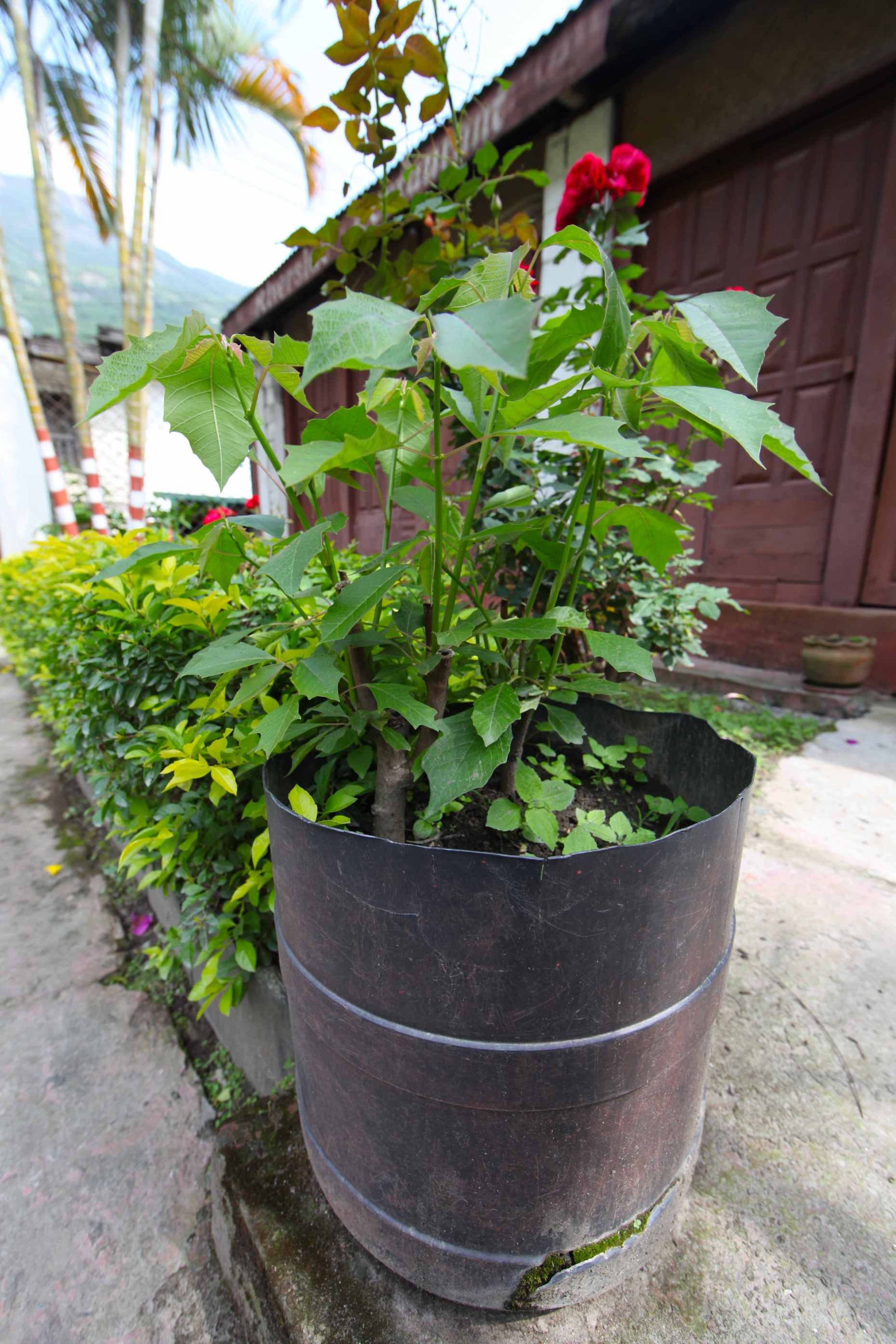 Large plastic containers make great container gardens. Think twice before you throw plastic receptacles away as someone might like to reuse it.