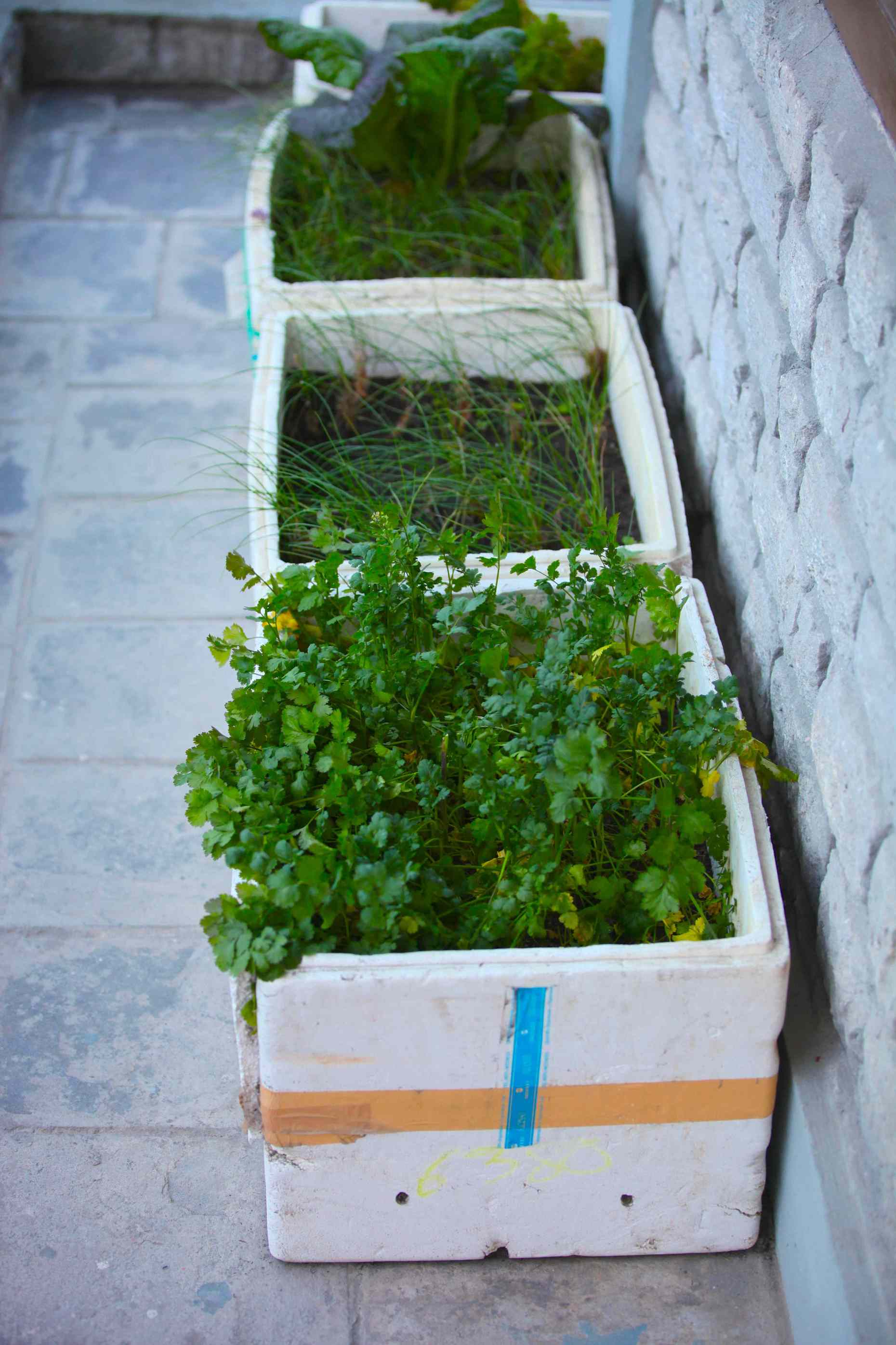 Herb planters in styrofoam. The village of Kalopani doesn't have styrofoam recycling. But this family found a way to reuse theirs to plant herbs for their restaurant.