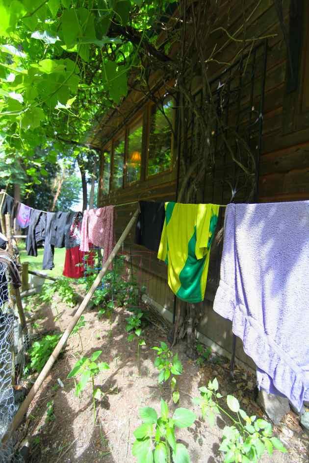 Drying laundry = happy tomato plants.